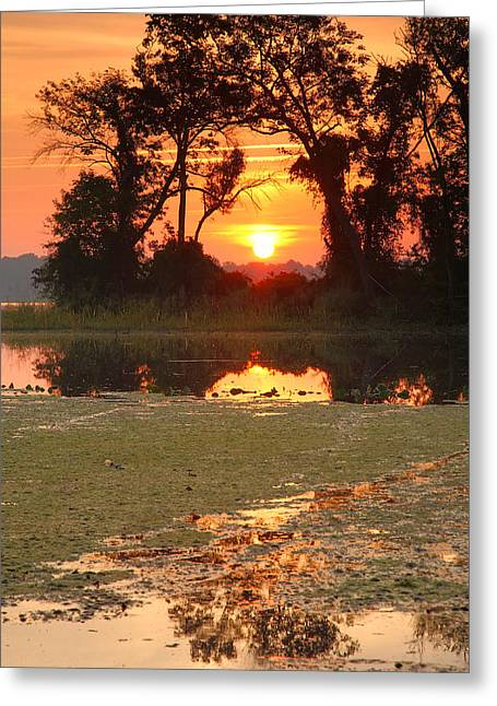 Wildlife Refuge. Greeting Cards - Breaking Out Greeting Card by Steven Ainsworth