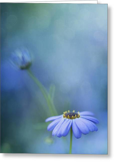 Daisy Greeting Cards - Breathe Deeply Greeting Card by Priska Wettstein