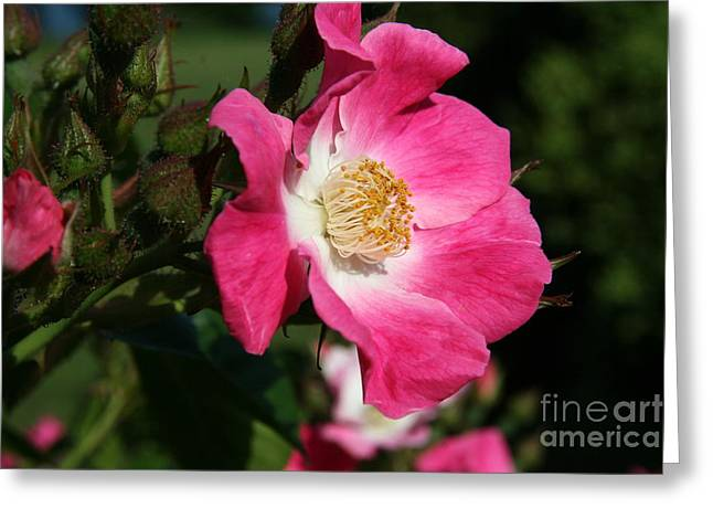 Flower Photos Greeting Cards - Breathe of Fresh Air  Greeting Card by Neal  Eslinger
