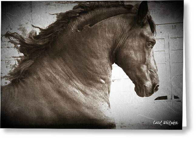Breathless Greeting Card by Royal Grove Fine Art