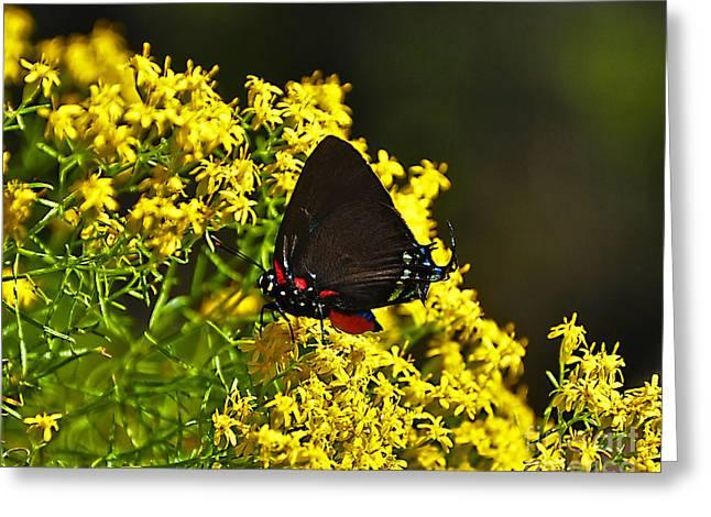 Al Powell Photography Usa Greeting Cards - Breathtaking Butterfly Greeting Card by Al Powell Photography USA