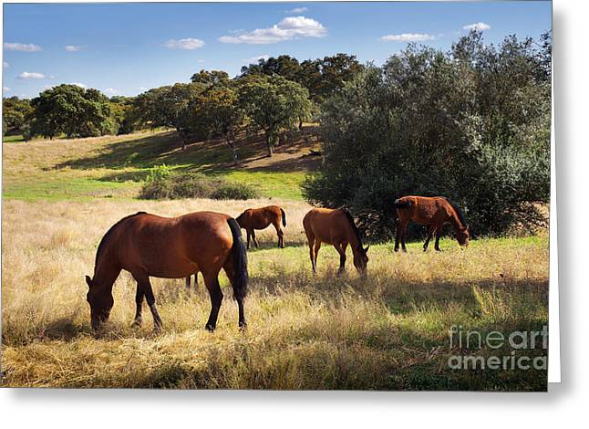 Breed of Horses Greeting Card by Carlos Caetano