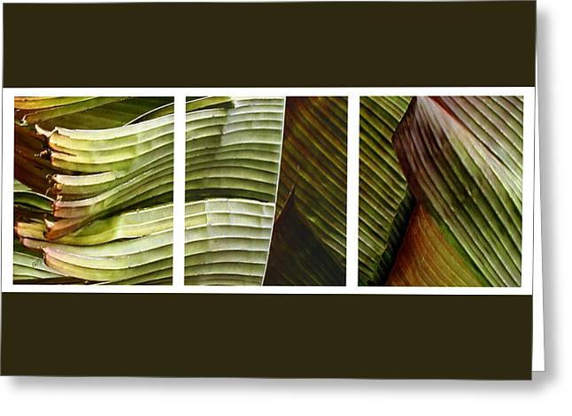 Abstractions Greeting Cards - Breeze - Banana Leaf Triptych Greeting Card by Ben and Raisa Gertsberg