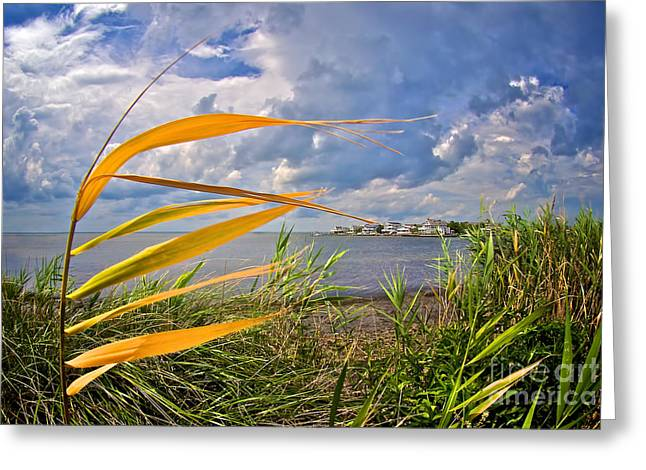 Barnegat Inlet Greeting Cards - Breezy Day on Long Beach Island Greeting Card by Mark Miller