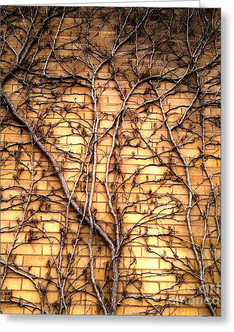 Brick Vines Greeting Card by Gregory Dyer