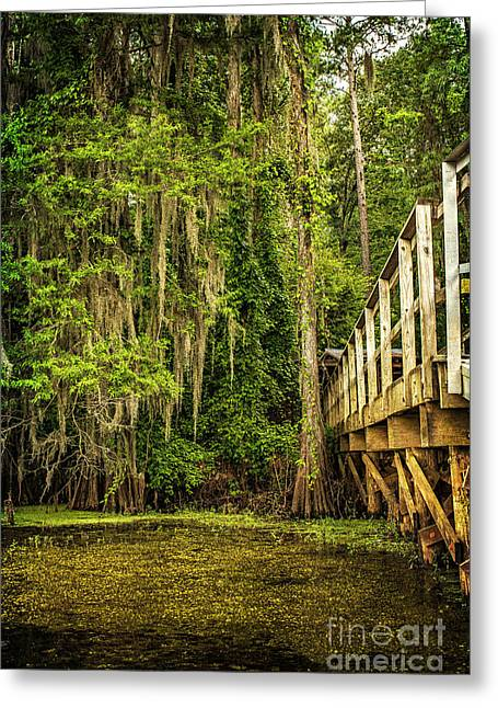 Caddo Lake Bridge Into The Forest II Greeting Card by Tamyra Ayles