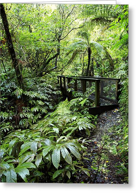 Hike Greeting Cards - Bridge Greeting Card by Les Cunliffe