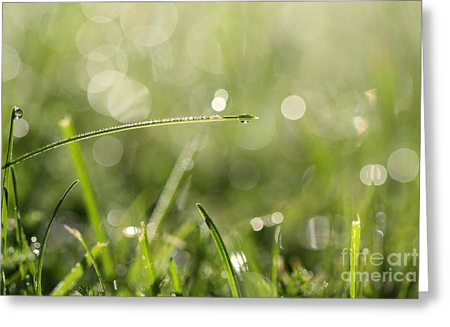 Green Blade Of Grass Greeting Cards - Bridge of grass Greeting Card by Jana Behr