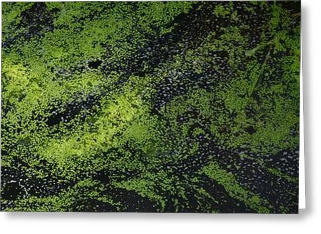 Alga Greeting Cards - Bridge Over The Algae 3  Greeting Card by Lyle Crump