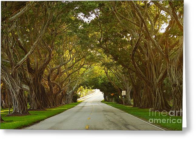 Bridge Road Banyans Greeting Card by Lynda Dawson-Youngclaus