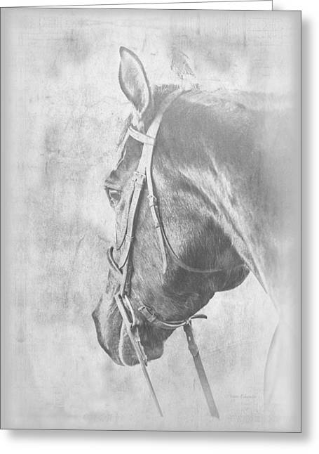 Bridled Horse Waiting Greeting Card by Renee Forth-Fukumoto
