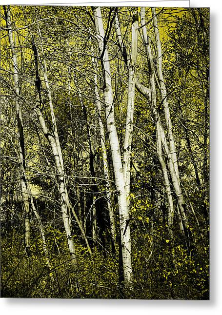 Briers And Brambles Greeting Card by Luke Moore