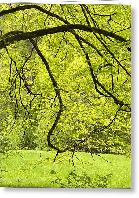Fresh Green Greeting Cards - Bright and fresh green nature in spring Greeting Card by Matthias Hauser