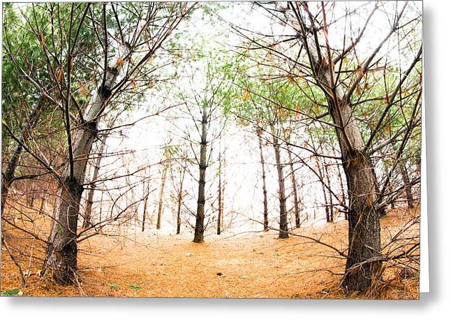 Overexposed Greeting Cards - Bright Beyond the Pine Forest Greeting Card by Jackie Novak