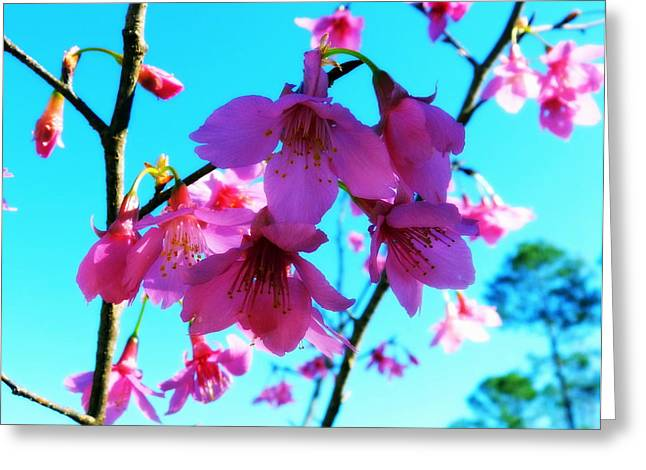Florida Panhandle Digital Art Greeting Cards - Bright Blossoms Greeting Card by Carla Parris