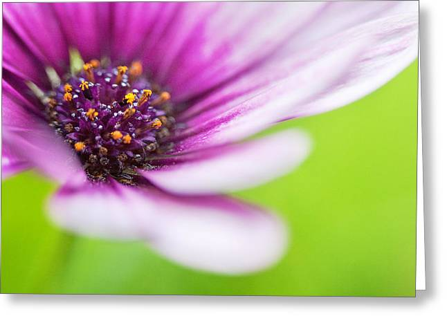 Close Focus Floral Greeting Cards - Bright Floral Display Greeting Card by Natalie Kinnear