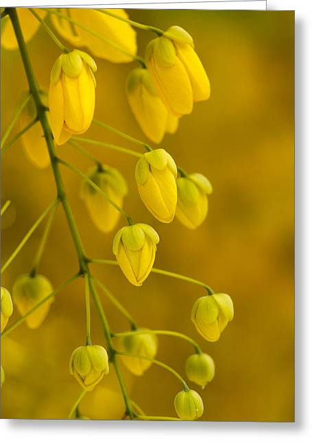 Fistula Greeting Cards - Bright Golden Love Greeting Card by Mario Morales Rubi