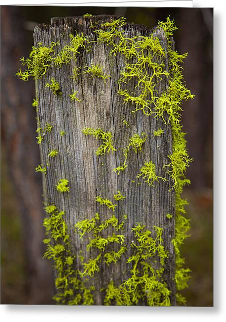Okanogan National Forest Greeting Cards - Bright Green Lace Greeting Card by Omaste Witkowski