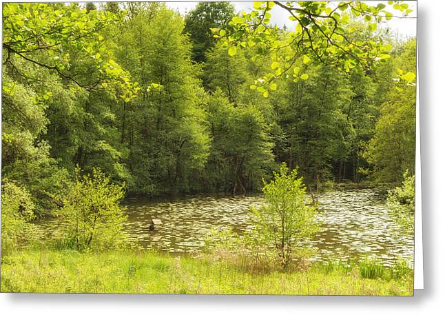 Deutschland Greeting Cards - Bright green spring landscape - lake and trees Greeting Card by Matthias Hauser