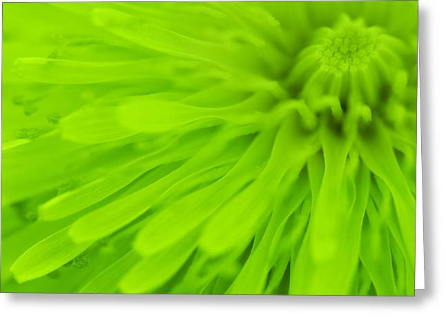 Vivid Colour Greeting Cards - Bright Lime Green Dandelion Close Up Greeting Card by Natalie Kinnear