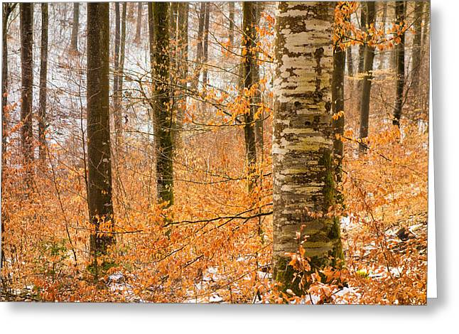 Winterly Forest Greeting Cards - Bright orange leaves in winterly forest Greeting Card by Matthias Hauser