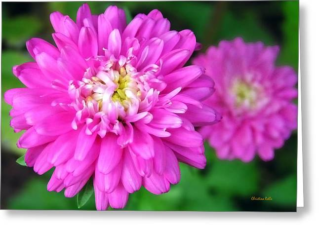 Bright Pink Zinnia Flowers Greeting Card by Christina Rollo