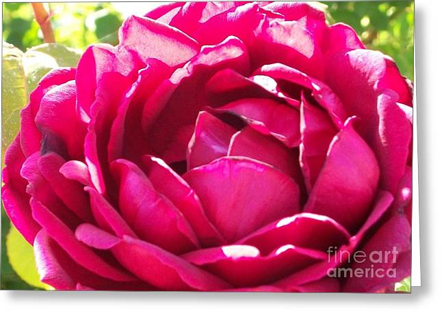 Rose Highlights Greeting Cards - Bright Rose Greeting Card by Emily Young