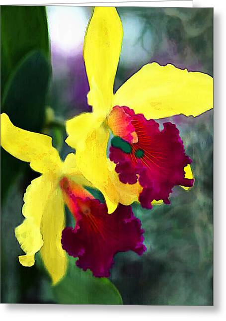 Cattleya Greeting Cards - Bright Spot in the Jungle Greeting Card by Elaine Plesser