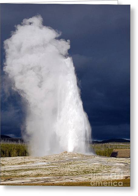 Old Faithful Greeting Cards - Bright Steam Plume set against a Darkening Sky from Old Faithful Geyser in Yellowstone National Park Greeting Card by Shawn O