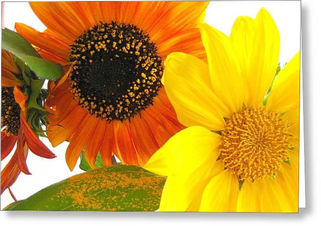 Bright Trio Greeting Card by Kathy Bassett