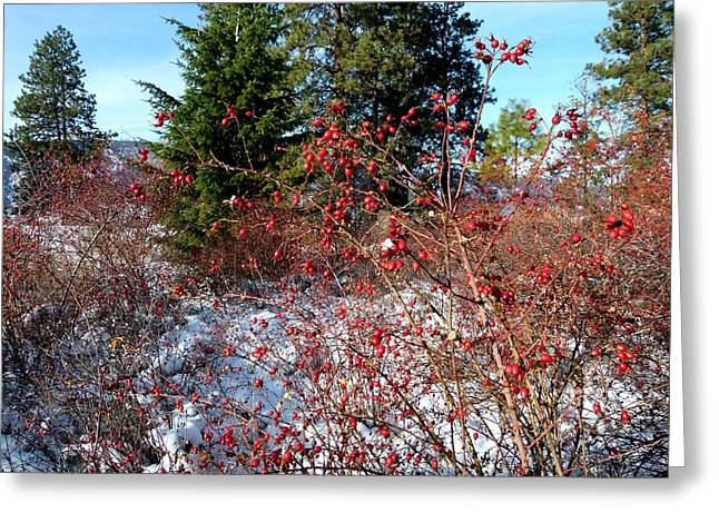 Fir Trees Greeting Cards - Bright Winter Rosehips Greeting Card by Will Borden