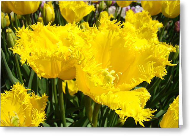 Popular Flower Art Greeting Cards - Bright Yellow Spring Tulip Flowers Garden Greeting Card by Baslee Troutman