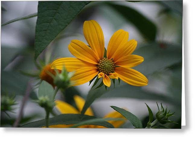 Flower Photos Greeting Cards - Brighter Days Greeting Card by Neal  Eslinger