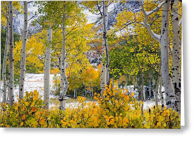 Brilliant Autumn Greeting Card by Leland D Howard