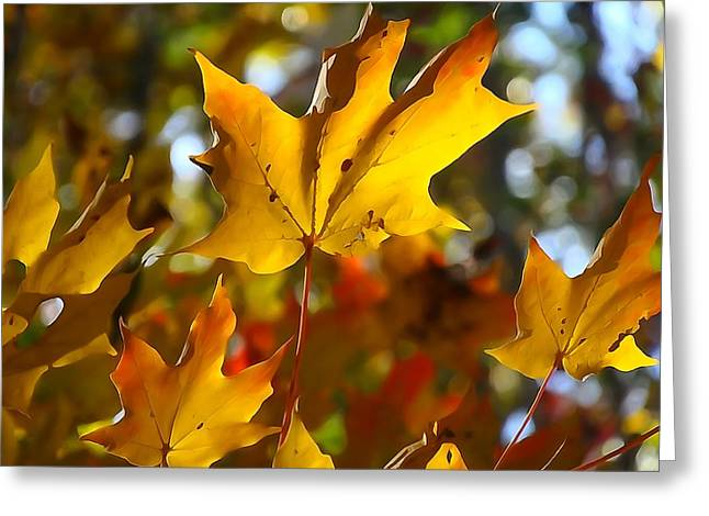 Red Leaves Mixed Media Greeting Cards - Brilliant Autumn Light And Color Greeting Card by Dan Sproul