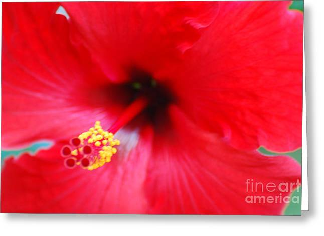 Hibiscus Coast Greeting Cards - Brilliant Red Hibiscus Greeting Card by DejaVu Designs