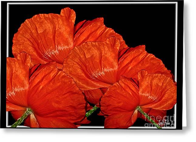 Flower Blossom Greeting Cards - Brilliant Red Poppy Flowers Greeting Card by Carol F Austin