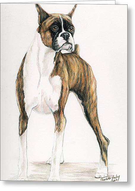 Brindle Boxer Greeting Card by Charlotte Yealey