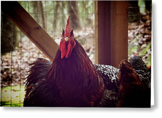 Rooster Photographs Greeting Cards - Bring It Greeting Card by Brandon Addis