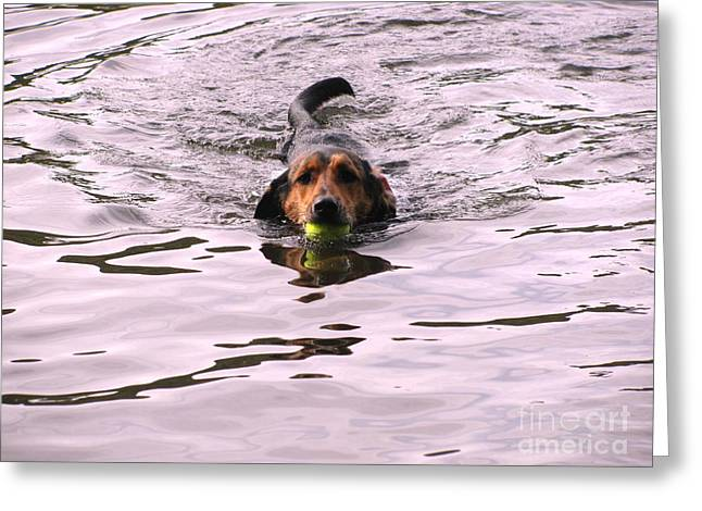 Dog In Lake Greeting Cards - Fetch PHOTO Greeting Card by Grace Liberator