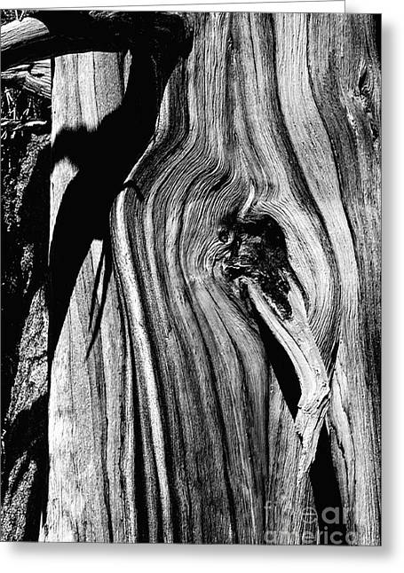Print On Canvas Pyrography Greeting Cards - Bristle-cone Pine-3 Greeting Card by Mae Wertz