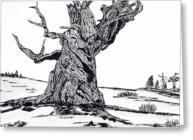 Gnarled Drawings Greeting Cards - Bristle Cone Pine Greeting Card by Bill C Smith