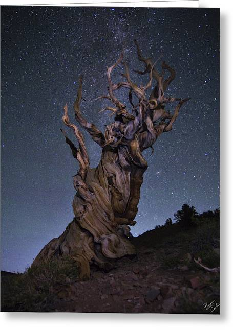 Andromeda Galaxy Greeting Cards - Bristlecone Ballet Greeting Card by Peter Coskun