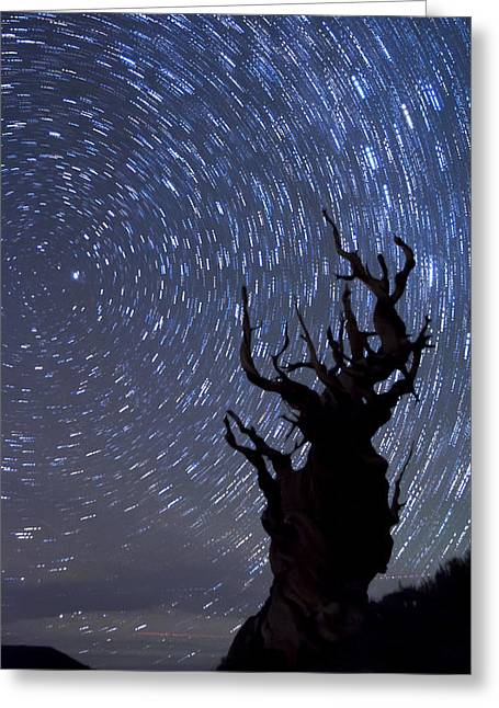 Startrails Greeting Cards - Bristlecone Star Trails Greeting Card by Cat Connor