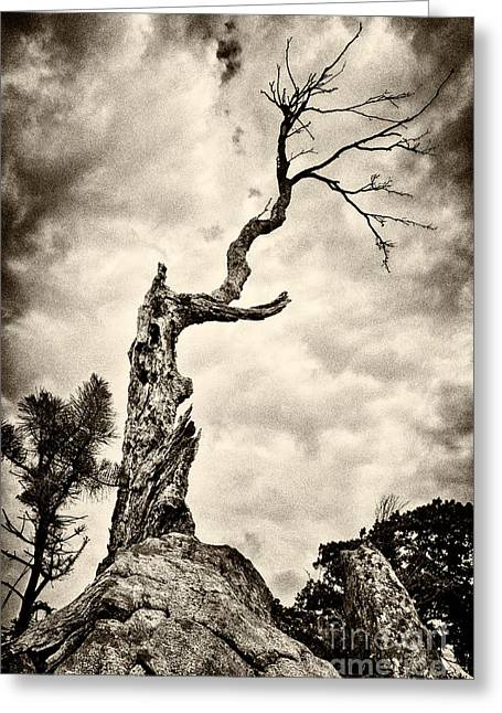 White Knob Mountains Greeting Cards - Bristlecone Wannabe Greeting Card by Dan Carmichael