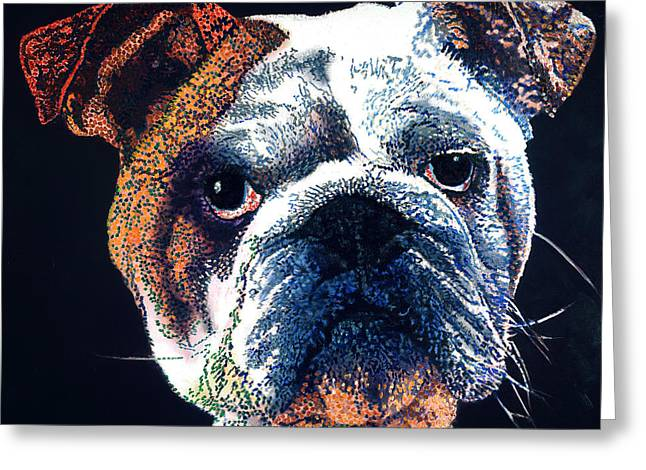 British Bulldog Greeting Cards - British Bulldog Greeting Card by Barry Novis