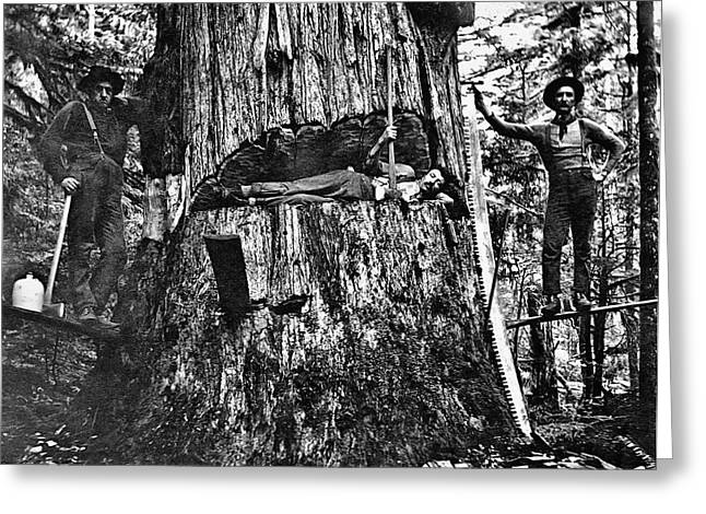 Douglas Fir Trees Greeting Cards - BRITISH COLUMBIA LUMBERJACKS c.  1890 Greeting Card by Daniel Hagerman