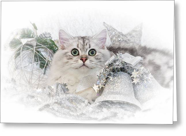 Star Points Greeting Cards - British Longhair Cat CHRISTMAS TIME II Greeting Card by Melanie Viola