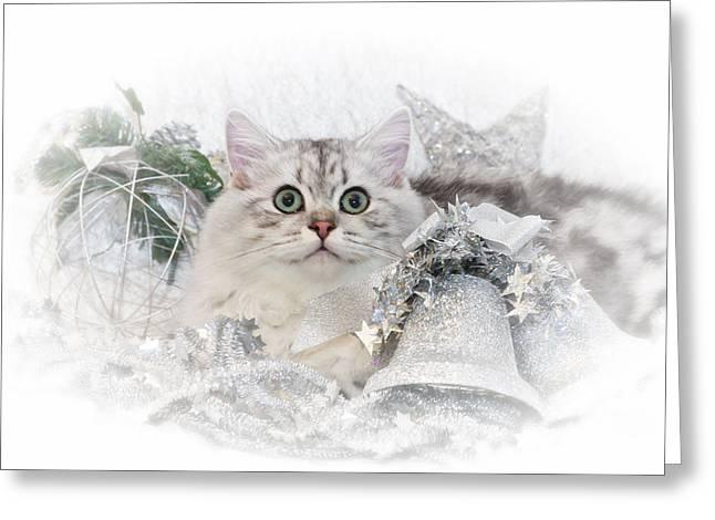 British Longhair Cat Christmas Time II Greeting Card by Melanie Viola