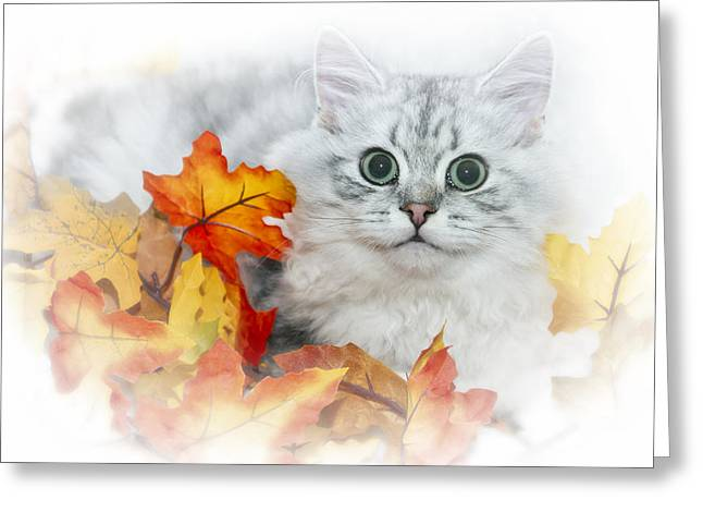 British Longhair Cat Greeting Card by Melanie Viola